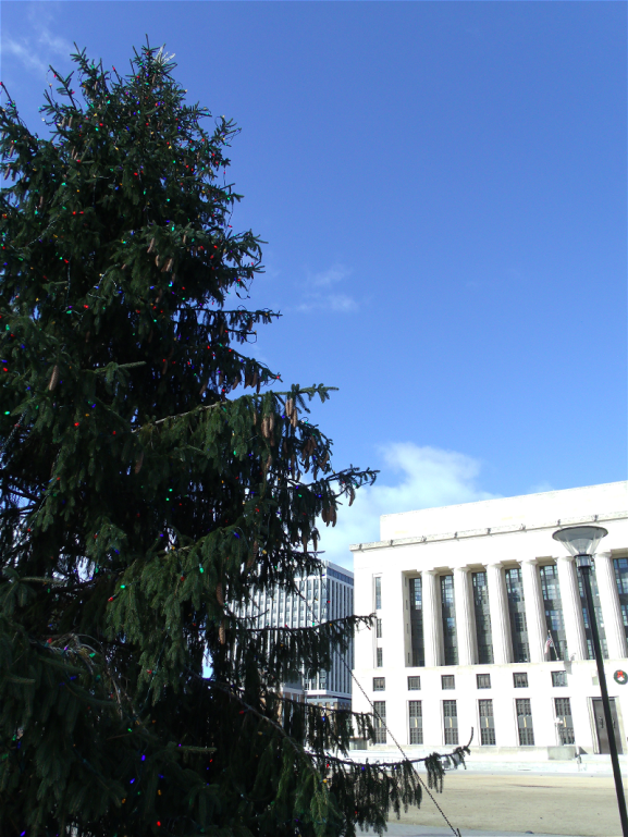 courthouse tree2